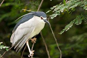 observacion-aves